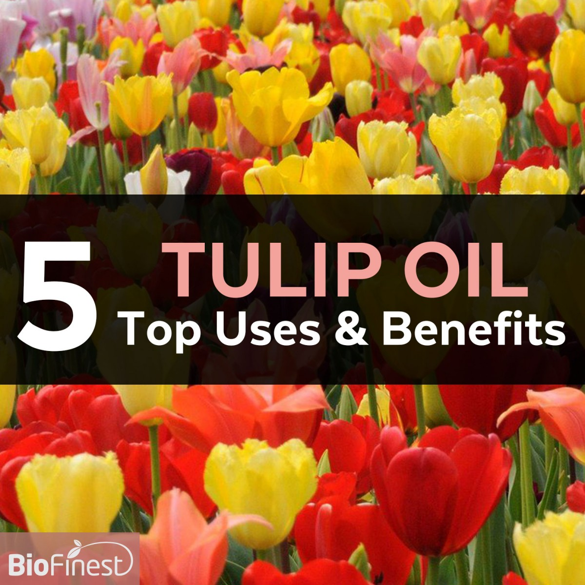 5 Marvelous Benefits And Uses Of Tulip Essential Oil
